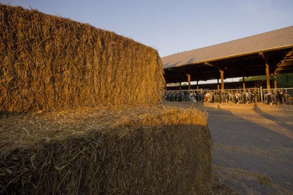 La ferme de Viltain à Jouy-en-Josas (78). Production laitière et vente directe.