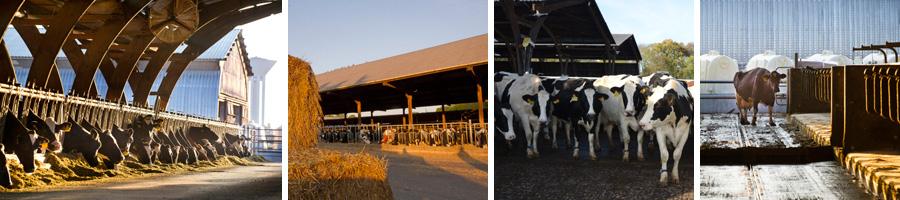 Visiter la ferme, La Ferme de Viltain